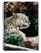 Leopard Watching It's Prey Spiral Notebook
