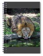 Lion Drinking Water Spiral Notebook