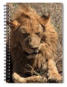 Lions Of The Ngorongoro Crater - Tanzania Spiral Notebook