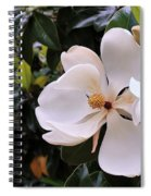Magnificent Magnolia Spiral Notebook