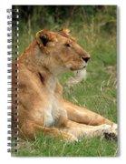 Masai Mara Lioness Spiral Notebook