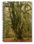 Moss-covered Big Leaf Maple Tree Spiral Notebook