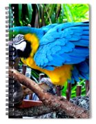 Parrot Greeting Card Spiral Notebook