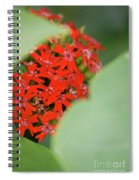 Red Butterfly Buds By Jammer Spiral Notebook