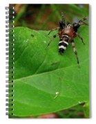 Sergiolus Capulatus  Spiral Notebook