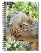 Sycamore Tree's Twisted Trunk Spiral Notebook