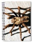 Tarantula Spiral Notebook