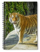 Tiger Tiger Spiral Notebook