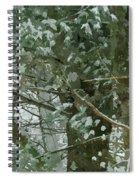 Tree Branch Spiral Notebook