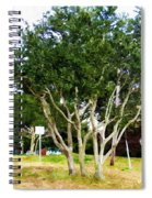 Trees In A Suburban Neighborhood In Summer Spiral Notebook