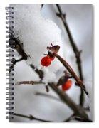001 Frozen Berries Spiral Notebook
