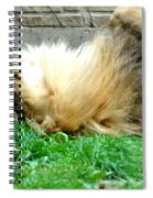 001 Lazy Boy At The Buffalo Zoo Spiral Notebook