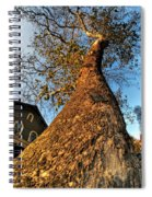 001 Oldest Tree Believed To Be Here In The Q.c. Series Spiral Notebook