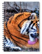 0014 Siberian Tiger Spiral Notebook