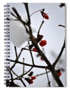 002 Frozen Berries Spiral Notebook