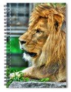 002 Lazy Boy At The Buffalo Zoo Spiral Notebook