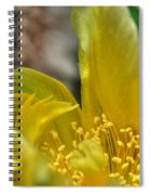 003 For The Cactus Lover In You Buffalo Botanical Gardens Series Spiral Notebook