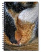 0053 Sleeping Cleo Spiral Notebook