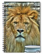006 Lazy Boy At The Buffalo Zoo Spiral Notebook