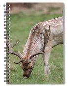 01 Fallow Deer Spiral Notebook