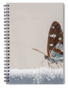 01 Southern White Admiral Butterfly Spiral Notebook