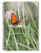 02 Balkan Copper Butterfly Spiral Notebook