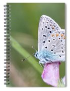 02 Common Blue Butterfly Spiral Notebook