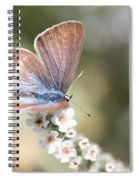 02 Long-tailed Blue Butterfly Spiral Notebook