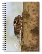 02 New Forest Cicada  Spiral Notebook