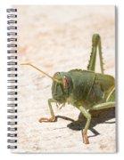 03 Egyptian Locust Grasshopper Spiral Notebook