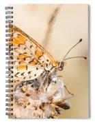 03 Lesser Spotted Fritillary Spiral Notebook