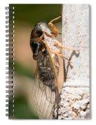 03 New Forest Cicada  Spiral Notebook