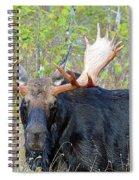 0341 Bull Moose Spiral Notebook