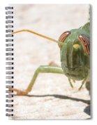 04 Egyptian Locust Grasshopper Spiral Notebook