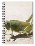 05 Egyptian Locust Grasshopper Spiral Notebook