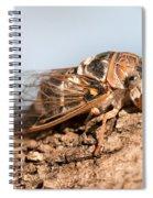 05 New Forest Cicada  Spiral Notebook