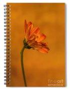 055 Spiral Notebook
