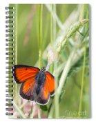 07 Balkan Copper Butterfly Spiral Notebook