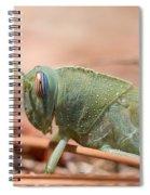 08 Egyptian Locust Grasshopper Spiral Notebook