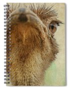 Ostrich Closeup Spiral Notebook