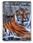0013 Siberian Tiger Spiral Notebook