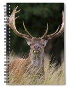 120425p037 Spiral Notebook