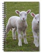 130201p089 Spiral Notebook
