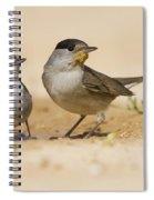2 Male Eurasian Blackcap Spiral Notebook