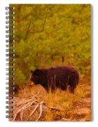 A Black Bear Spiral Notebook