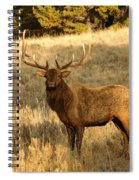 A Bull Elk In Rut Spiral Notebook