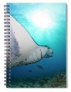 A Reef Manta Ray  Manta Alfredi Spiral Notebook