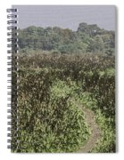 A Small Path Through Very Tall Grass Inside The Okhla Bird Sanctuary Spiral Notebook