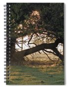 A Tree In Mississippi Spiral Notebook