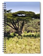 Acacia Trees Spiral Notebook